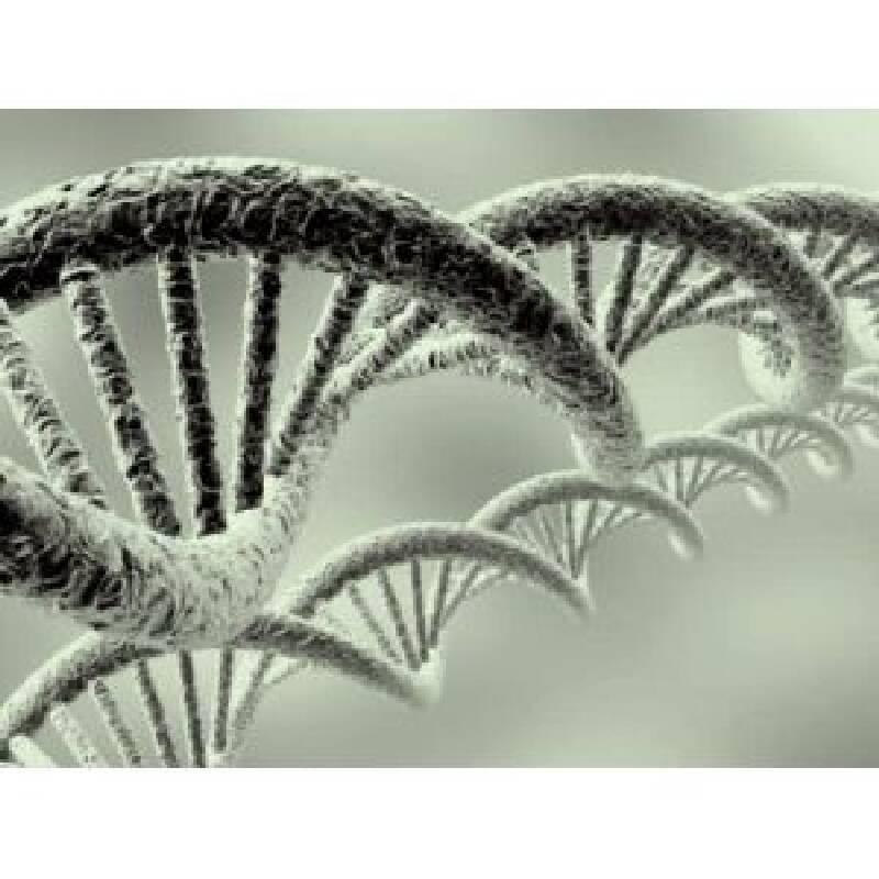 Faktör Beş Gen Değişimi