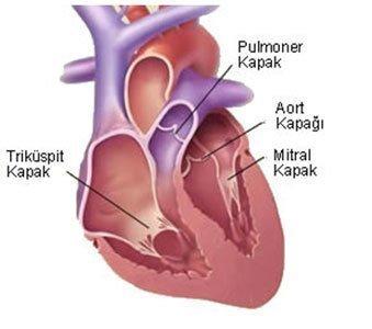 Kalp Kapak Hastalıkları